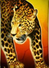 Leopard Spring Queen